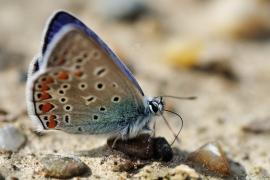 Lepidoptera - Alben und Galerien