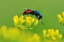 Hymenoptera - Alben und Galerien