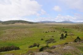 Vicuña - Feuerland