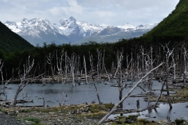 Um den Lago Deseado - Feuerland