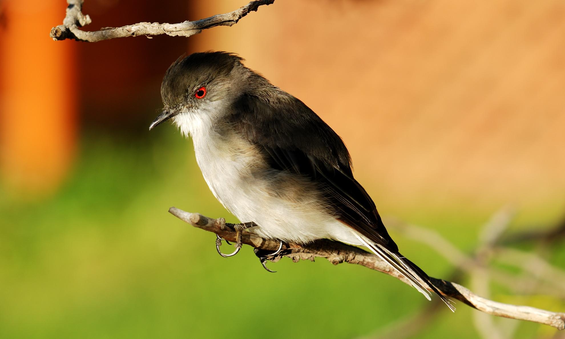 Aves - Patagonien