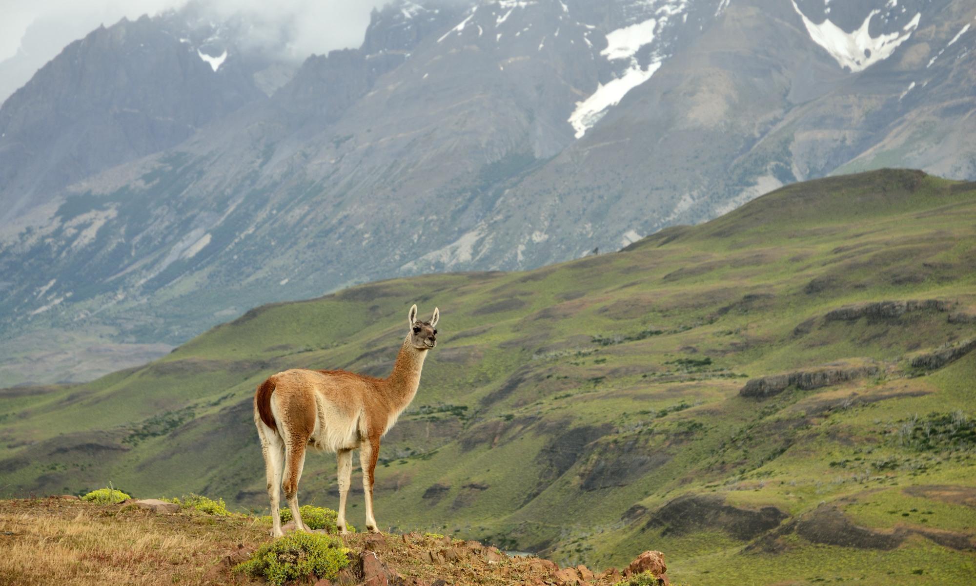 Mammalia - Patagonien